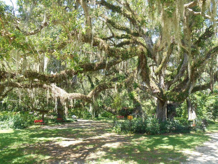 Dunlawton Sugar Mill Gardens Port Orange Florida Let 39 S Go Back Pinterest Gardens