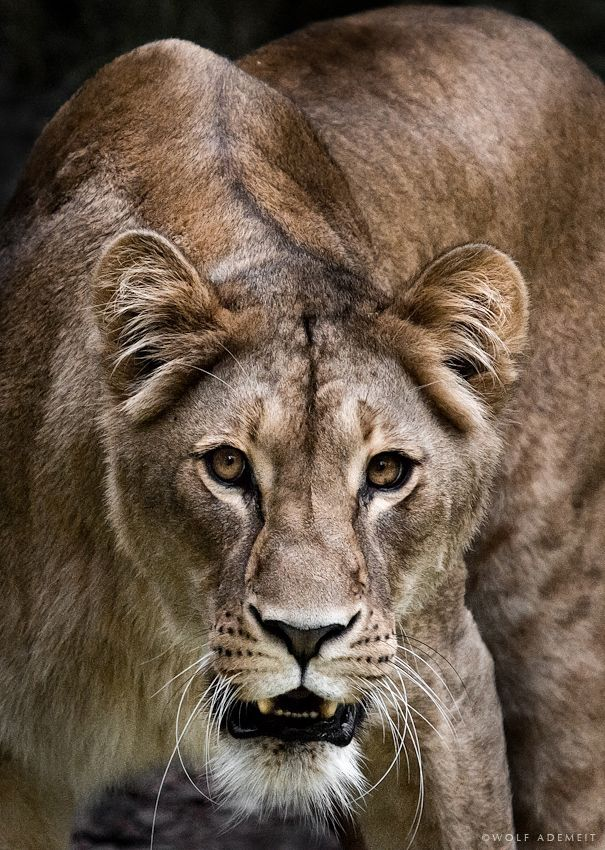 wowtastic-nature:  PURE POWER by  Wolf Ademeit on 500px.com