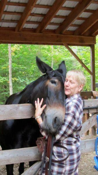 Tracey Merrett on Mule Girls ~ I have loved some great horses - but Jane - well Jane is so much more!