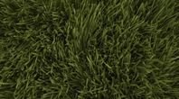 How to Grow Grass in California   eHow
