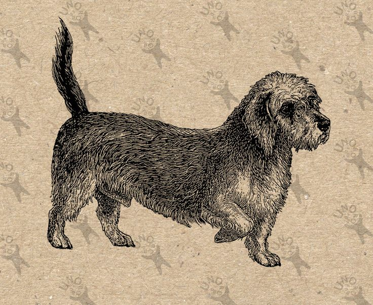 Vintage image Dog Dandie Dinmont Terrier clipart Instant Download Digital printable retro graphic Burlap Fabric Transfer Iron On HQ300dpi by UnoPrint on Etsy