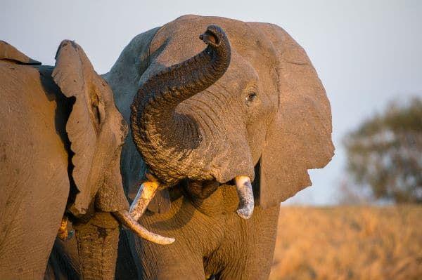 Sunway Safaris South Africa Rainbow Route Safari