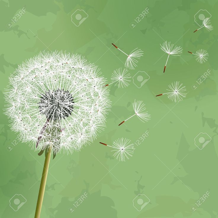 17927640-Vintage-floral-green-background-with-flower-dandelion-Invitation--Stock-Photo.jpg (1300×1300)