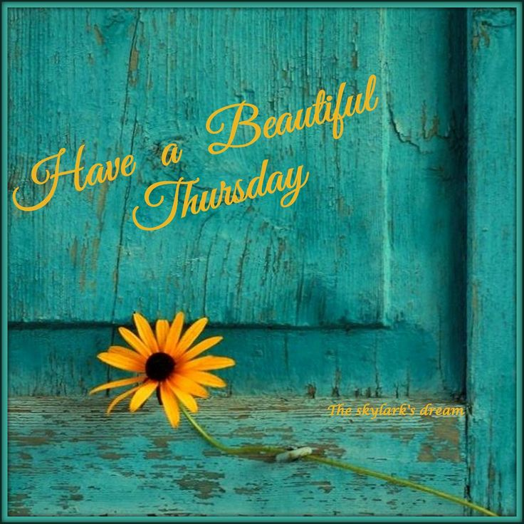Have a beautiful Thursday! ❤️