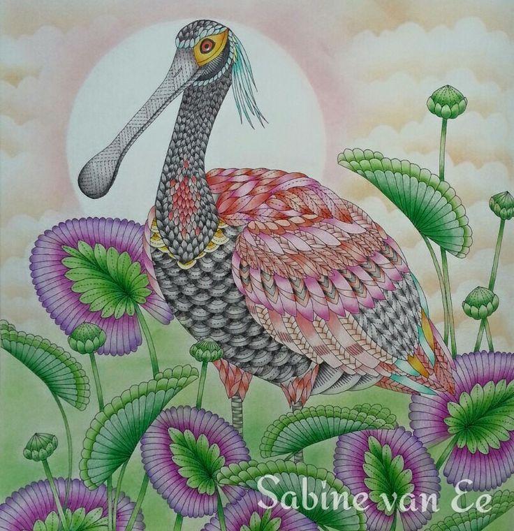 116 Best Millie Marotta Colouring Books Images On Pinterest
