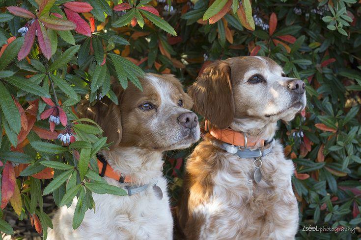 kutyafotózás  kutyafotós  #kutyafotózás dog photography budapest #dogphotography #dogphotographybudapest #kutyafoto #kutyafotó #kutyaportré #zséelphotography