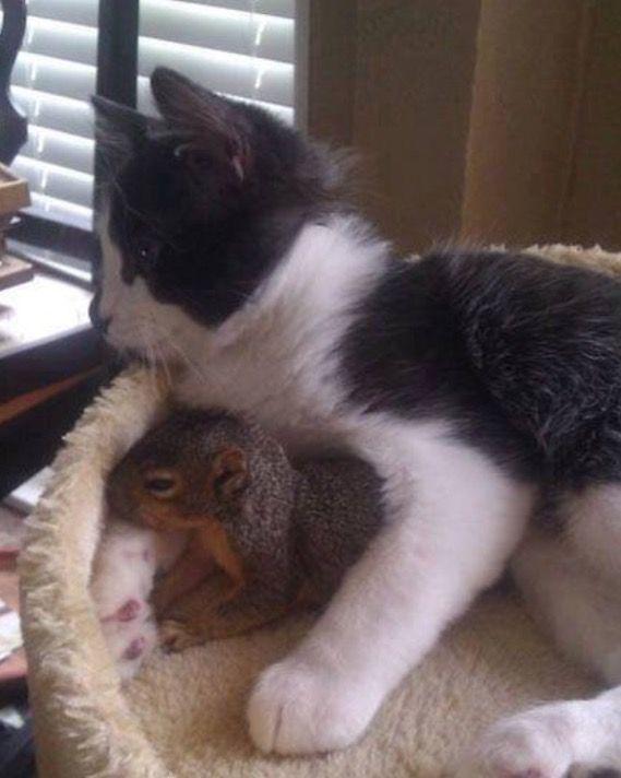 Best Buddies Images On Pinterest Cats Baby Lamb And - Owlet kitten meet coffee shop become best friends