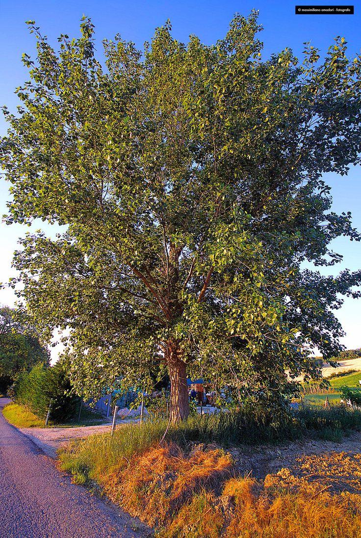 big tree by Massimiliano Amadori on 500px