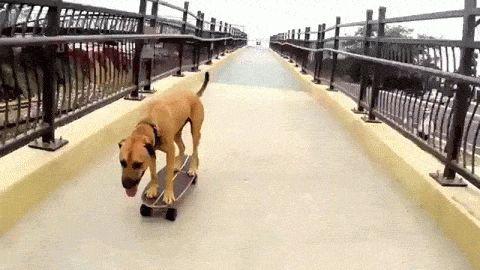 WOW! Skateboarding dog:)