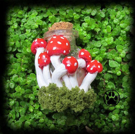 Fungi by Stuart McWilliam on Etsy