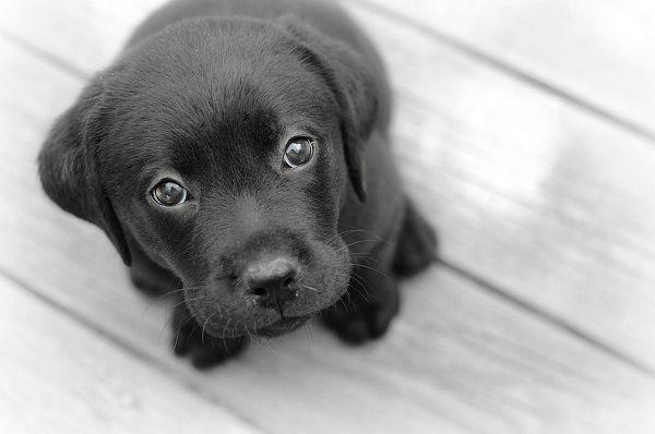 Дискриминация домашних животных или Почему людям не нравятся черные собаки? http://lpgenerator.ru/blog/2014/09/28/diskriminaciya-domashnih-zhivotnyh-ili-pochemu-lyudyam-ne-nravyatsya-chernye-sobaki/