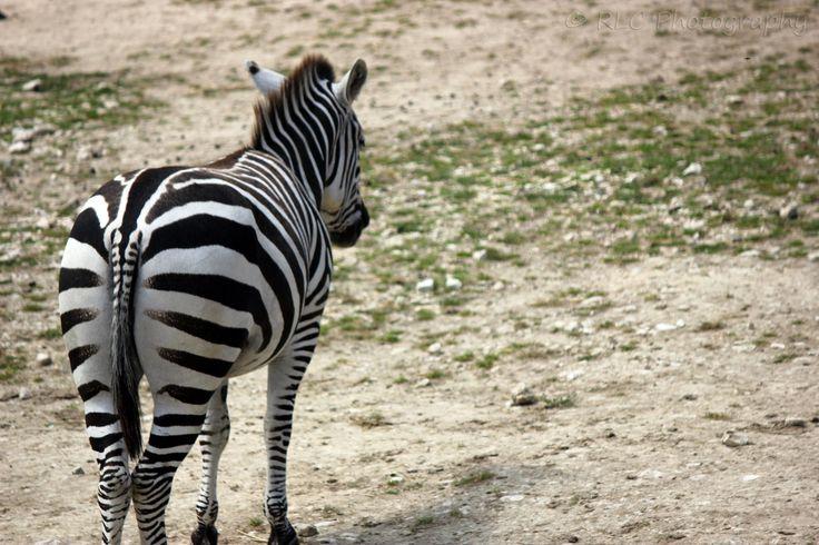 https://flic.kr/p/qwP4JW | Longleat Zoo | July 2013