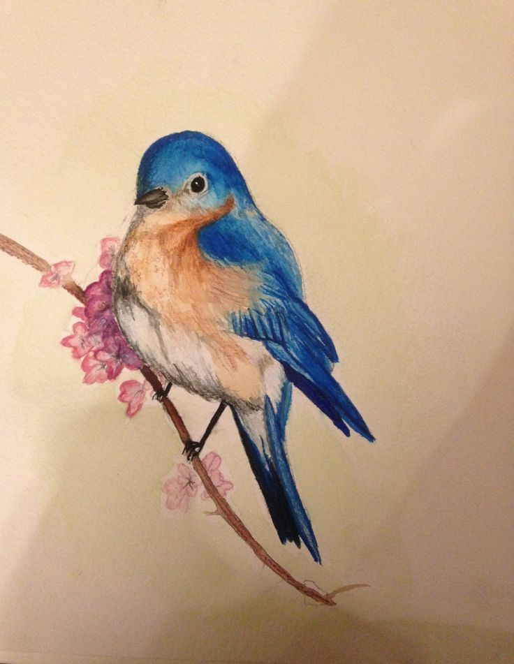 Blue Bird Water Color Painting Print By