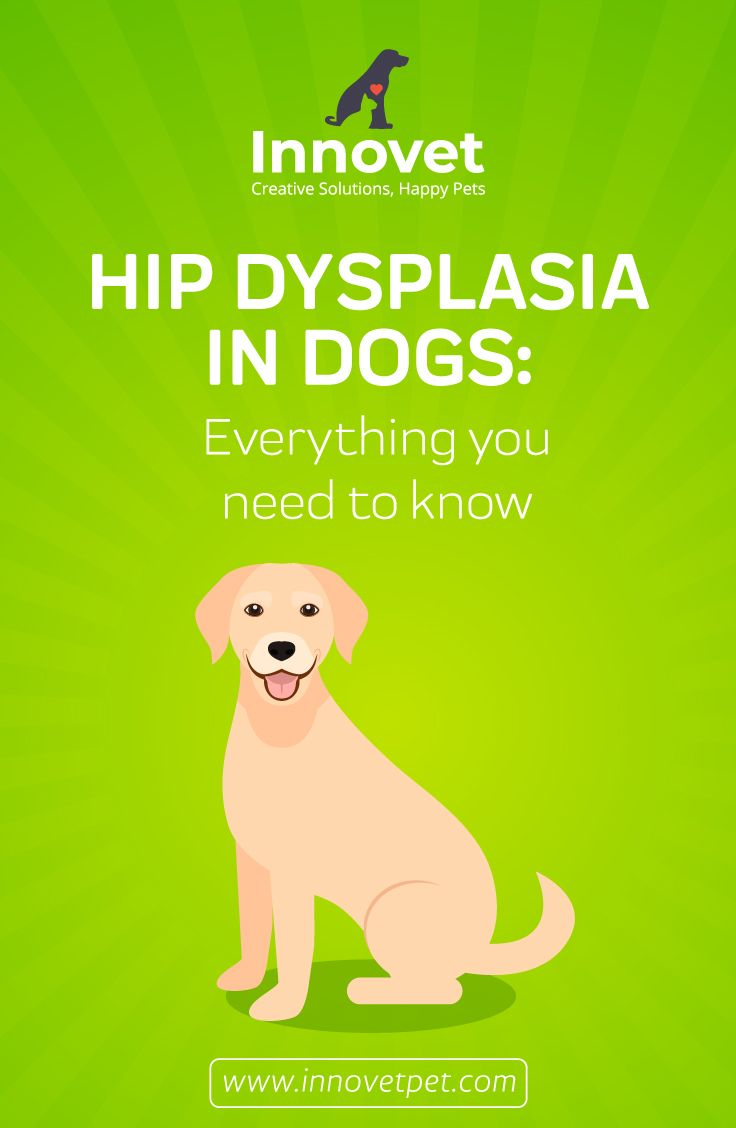 Hip Dysplasia In Dogs Large Dog Breeds Hip Dysplasia Dogs