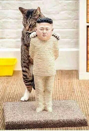 #gatti un modo simpatico per rifarsi le unghie su qualcuno che ci sta antipatico #kim jong un
