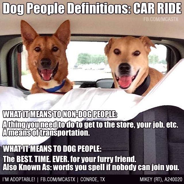 definitely! .. love the look of joy on their faces .. such a simple thing to us means so much to our furkids :)