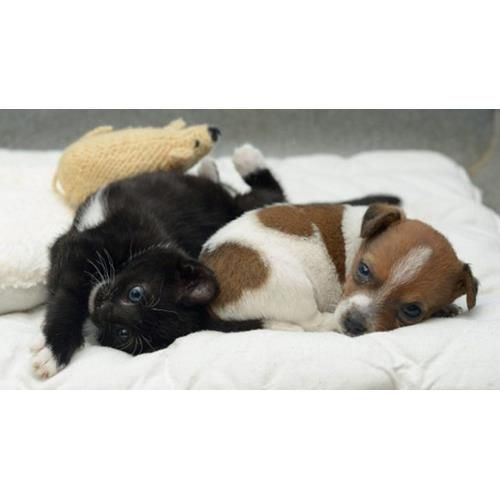 An orphaned puppy and an abandoned kitten have become inseparable since being brought together at the Battersea Cats and Dogs Home in the UK, and now think they are sisters.