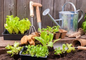 Have you always wanted to start a garden, but you have no idea where to start? I can help! http://bit.ly/ConfidentGardener