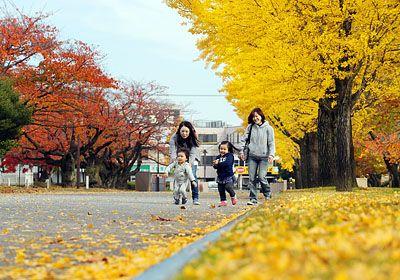 秋の深まりとともに県内の街路樹が色づいている。富山市五福の県五福公園では14日、黄金色のイチョウと赤いサクラの葉が鮮や… / 街路樹色づく 富山 - 北日本新聞 #紅葉 #新聞