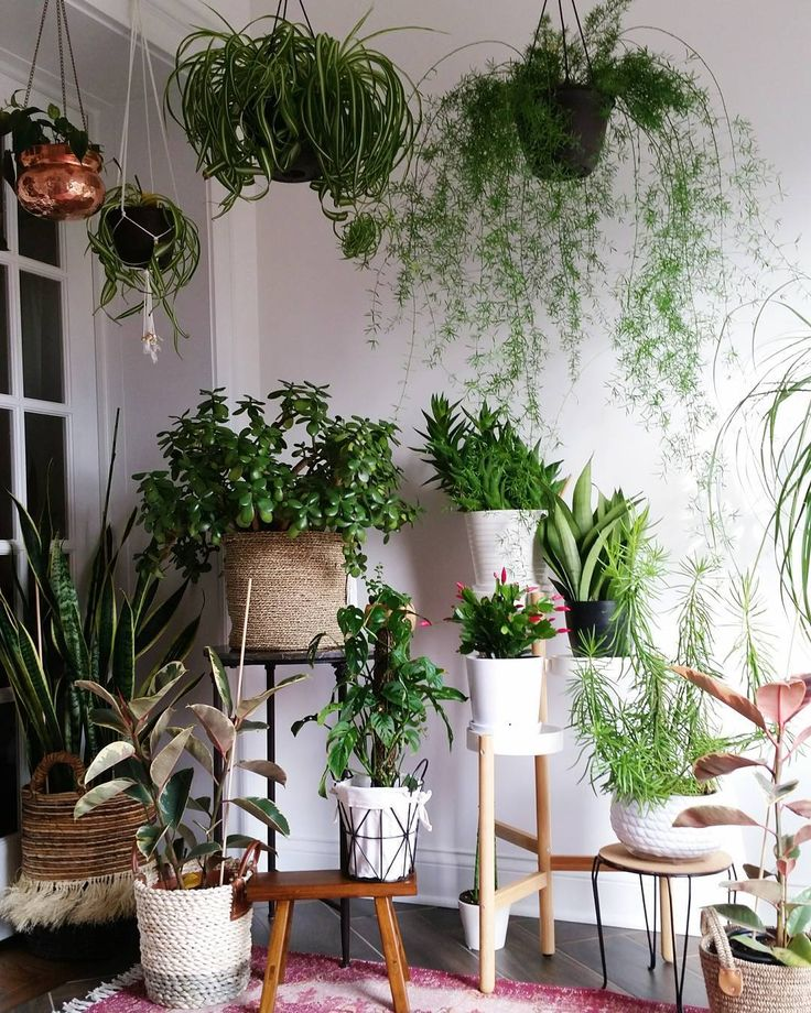 100 best pflanzen images on Pinterest Gardening, House plants - indoor garten anlegen geeignete pflanzen