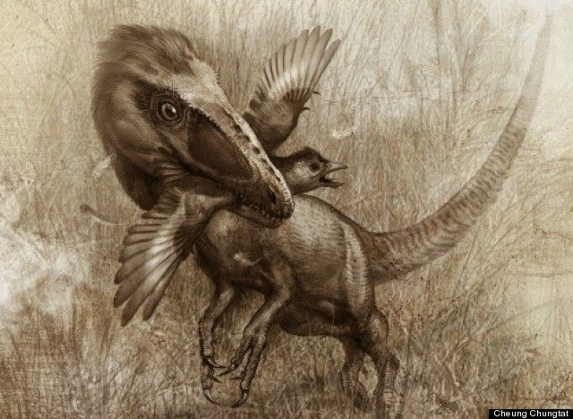 Dinosaur Fossils Show 'Wolf-Like' Species, Sinocalliopteryx, Preyed On Primitive Birds (PICTURES)