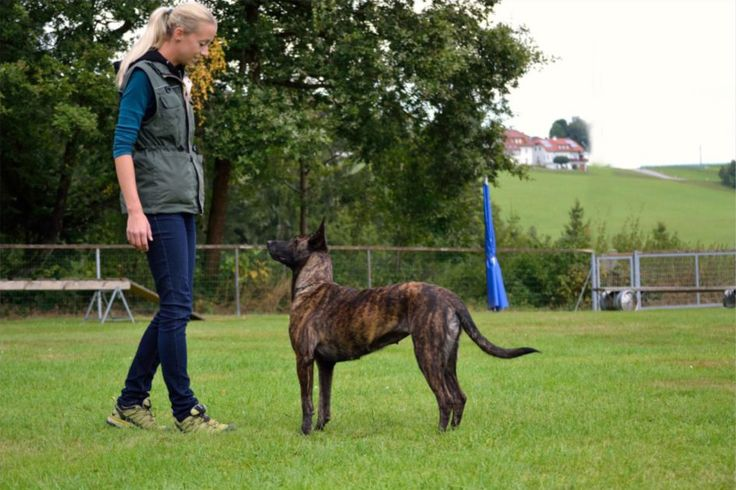 How Do You Know If You Have What It Takes To Become A Dog Trainer?
