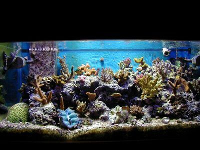 Saltwater Aquarium Set Up. Following these 10 easy steps you can have your new aquarium set up and running in no time at all.