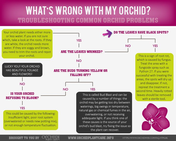 """""""What's Wrong with my Orchid?"""" Orchid Troubleshooting Guide #infographic"""