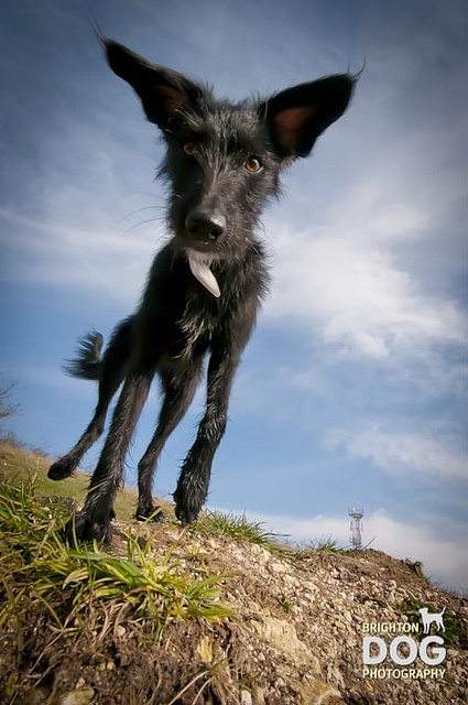 Brighton Dog Photography - Woofters-36 by brightondogphotography, sky as backdrop