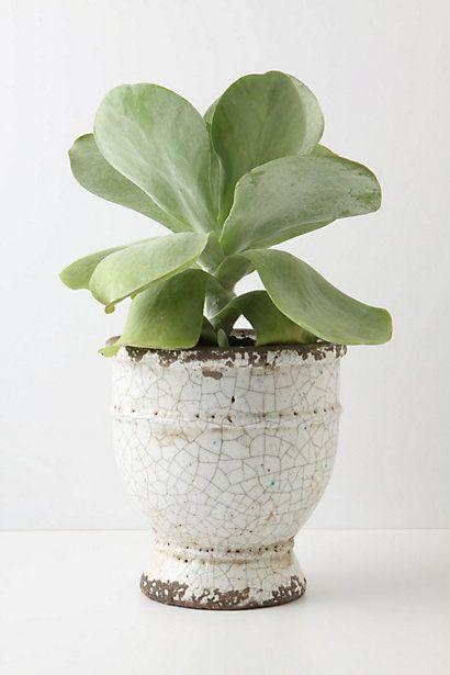 Ivory Epoch Pot, Large Urn #AnthropologieEU #PintoWin