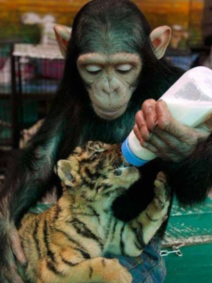 Jus takin care of business.  fur babies don't discriminate, why cant humans do the same? G.c.FIEND