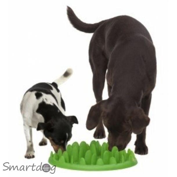 GREEN - Aktivitetslegetøj og foderskål