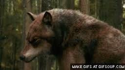 Resultado de imagem para jacob lobo