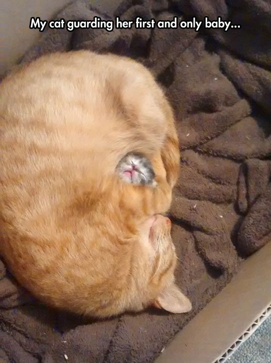 Mommy cat loves her one and only newborn infant kitten and cradles her as close as she possibly can to protect her from dangers. This is so precious. Bless her little heart. (08.05.14)