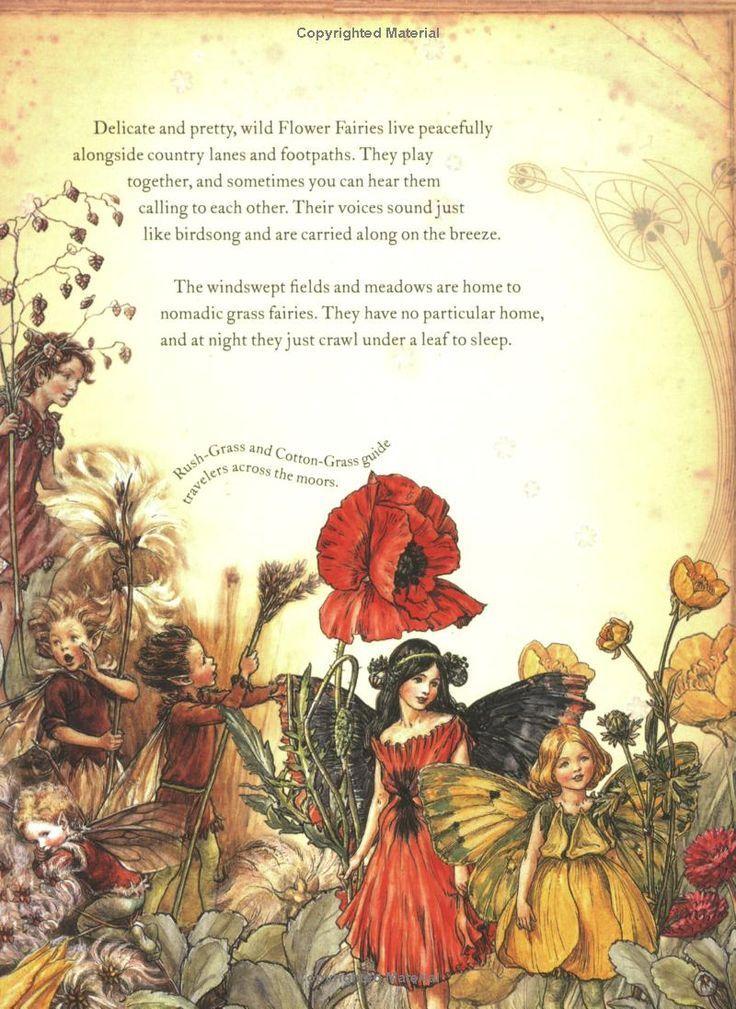 fairyland book by natalie bird