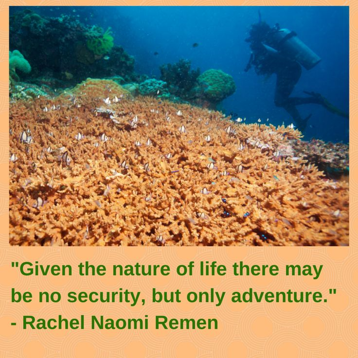 There may be only adventure Rachel Naomi Remen | Great book ...