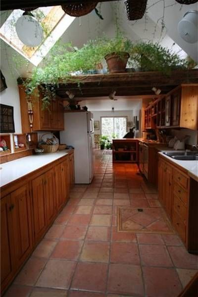 vaulted ceiling, terracotta tiles and the most amazing house plant I've ever seen
