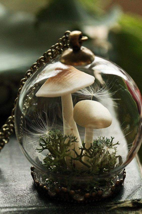 Wicked 25 Adorable Terrarium Ideas For You To Try https://ideacoration.co/2017/09/13/25-adorable-terrarium-ideas-try/ If a kid is bit they may shed interest in taking good care of the animal.