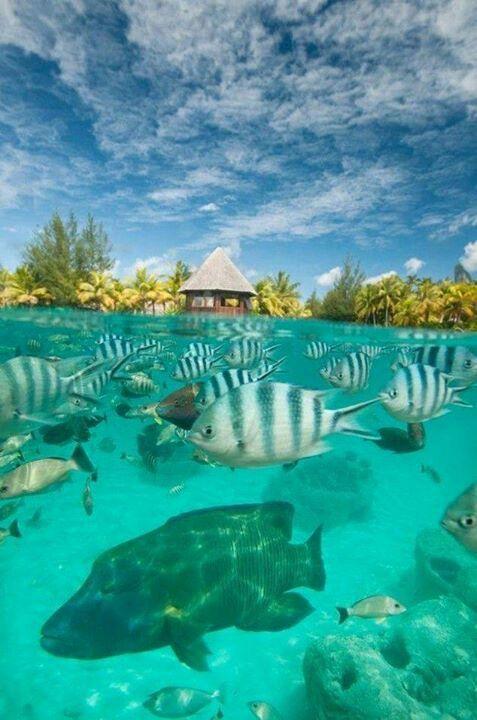 The Lagoonarium - St. Regis, Bora Bora