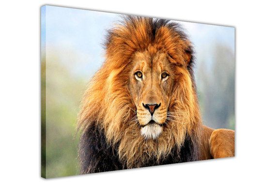 African Lion in the Wild Framed Pictures Canvas Wall by CanvasItUp