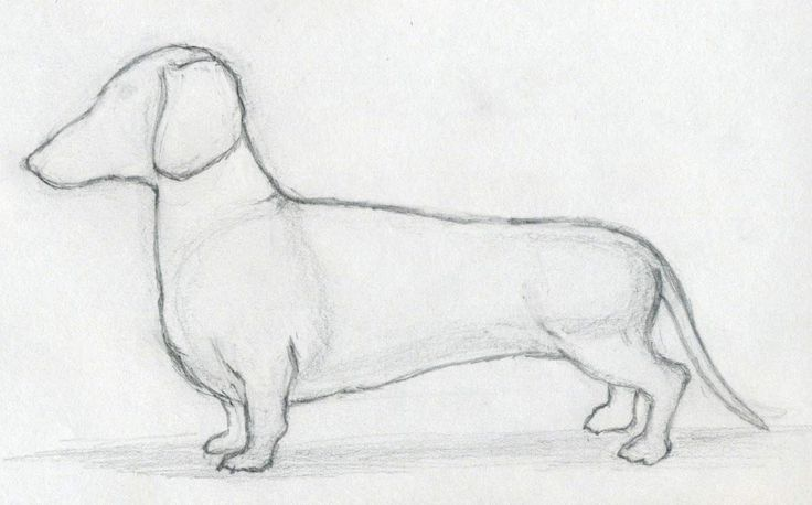 Cool Pics To Draw | How To Draw Dog