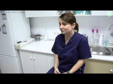 Amas a los animales? Sonia también y quiere contarte algo ...   www.campustraining.es/formacion-curso/veterinaria/88-ayudante-tecnico-veterinario.html?m=249