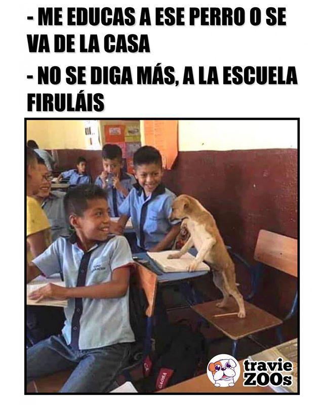 Estudiante Sobresaliente Animales Perro Dog School Escuela Memes Divertidos Memes Comicos Meme Gracioso