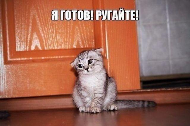 Прикольные картинки с текстом   Кошачьи мемы, Животные, Смешно