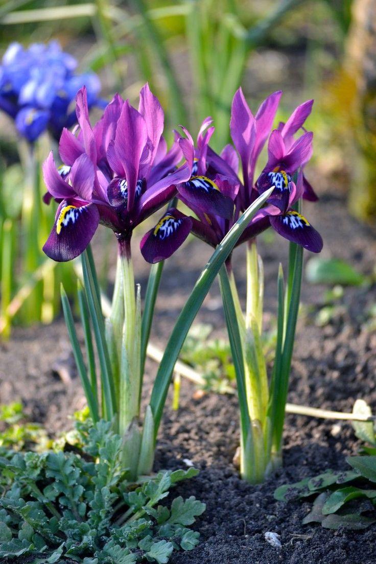 катка расположены цветы первоцветы фото и названия гусеницы едят большинстве