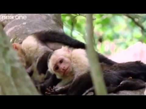 ANIMAL PLANET ... extreme funny talking animals