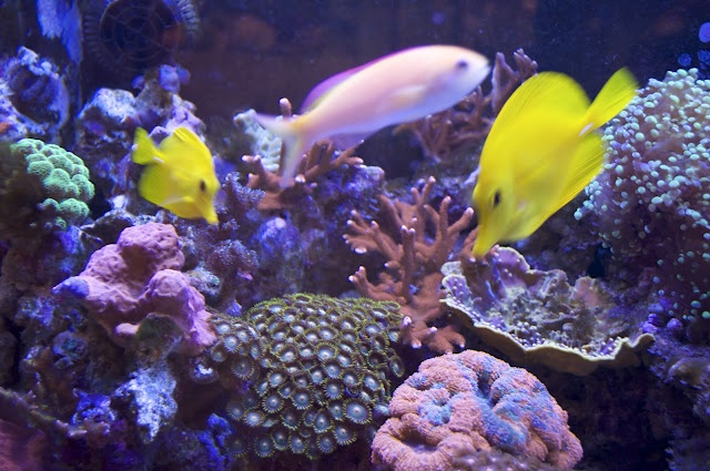 51 best images about aquarium on pinterest pink fish for 405 tropical fish