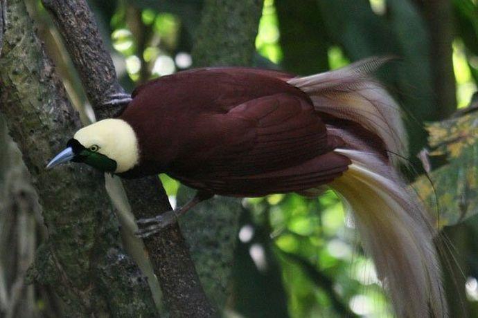 WarNet.ws: Самые красивые птицы (15 фото)