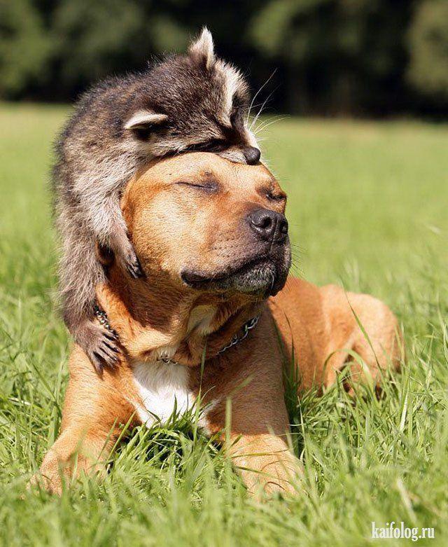 Картинки животные добрые