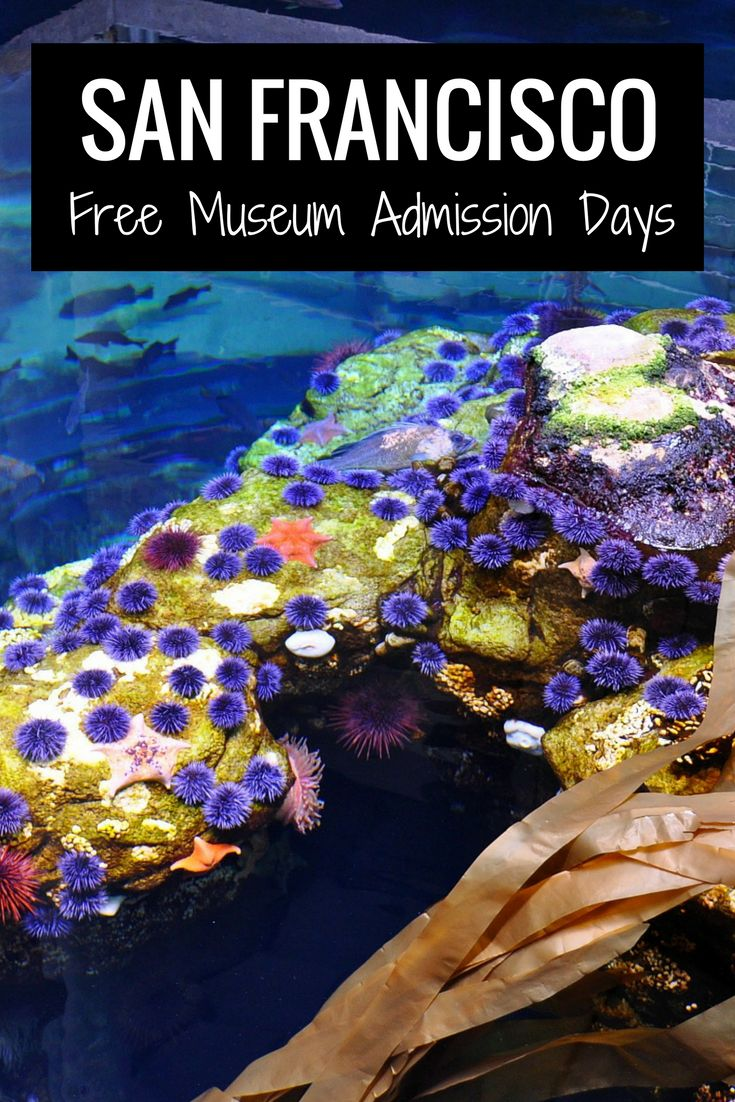 Calendar of free museum admission days in San Francisco | California Academy of Sciences | San Francisco with Kids #sanfrancisco #bayarea #travel
